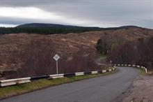 Felling of pine trees infected with Dothistroma blamed for flooding problems in northern Scotland