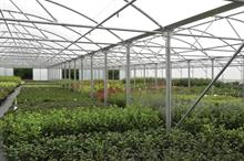 Market report - Polytunnels