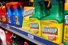 No glyphosate-free Roundup for UK