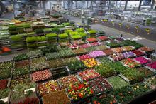 Royal FloraHolland trades 12.5 billion flowers and plants in 2016 but UK exports dip