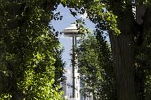 """Tree shading """"reduces maximum urban food production by 19-35 per cent"""", say US researchers"""