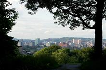 Sheffield calls on public to help shape tree policy