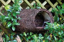 Best New Retail Product Wildlife - Winner: Simon King, Brushwood Robin Nester
