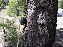 Music Professor Receives Patent to Help Fight Bark Beetles Ravaging Western USA Forests