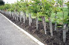 Tree guards and shelters