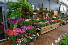 Meet the buyers event opens up garden retail markets in Switzerland, Iceland, Serbia and Romania