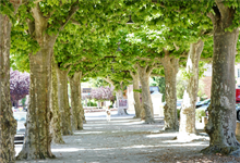 London Mayor starts £750,000 tree planting programme