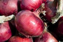UK grower launches sweet, tear-free red onion