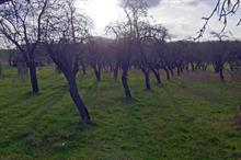 Historic Worcestershire orchard to be extended for wildlife