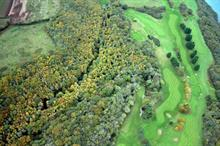 Council given till March to fell Phytophthora ramorum-infected trees