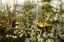 No backer for UK Horticulture Chelsea display