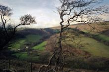 RFS highlights numerous current and future challenges to Welsh woodlands