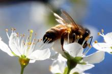 UN report calls for global action to restore pollinators