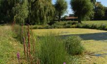 North Hertfordshire District Council restores pond
