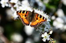 """Butterfly numbers """"negatively associated"""" with neonicotinoid use"""
