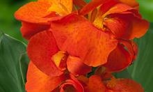 Green Works offers new cannas