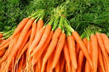 Reports of carrot diseases on the rise