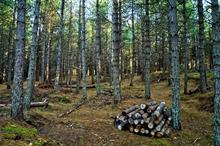 More forest cover does not mean a cooler climate, say researchers