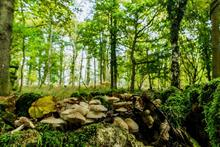 Ancient woodland loss to quarry shows why proposed protection is needed, says Woodland Trust