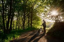 Should urban woodlands be more dog-friendly?