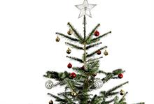 Real Christmas trees breach sub-£10 barrier
