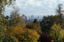 London trees worth £6bn, survey finds