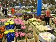 New Covent Garden Flower Market for Chelsea