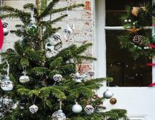 Dobbies Garden Centres offers £3,000 Christmas box