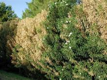More UK nurseries join buyers rejecting purchases from Xylella-impacted regions