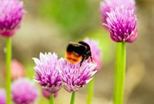 Plant pollinators campaign launched ahead of bee count