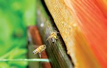 Wildlife and environment groups call for neonicotinoid pesticides ban to be retained and extended
