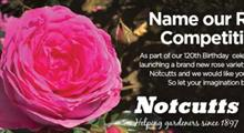 Notcutts celebrates 120th anniversary with new roses