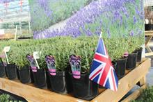 Leading UK ornamental nurseries see increase in turnover and profits