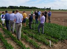 Persistent pests, weeds and diseases targeted under new SCEPTRE project