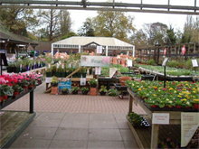 London garden centres under review