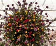 Marks & Spencer to showcase British heritage cut flowers at Chelsea