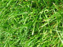 A quarter of homes don't have lawns survey finds
