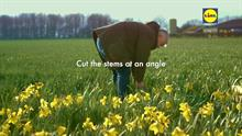 Lidl TV campaign designed to highlight produce quality features UK daffodil supplier