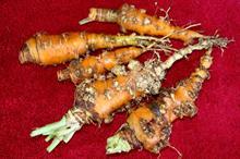 Check soil for damaging nematodes before planting, says FERA