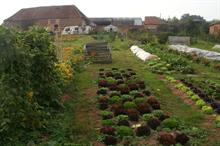 "UK organic farming area ""not rising in line with market demand"""