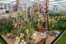 Howard Nurseries resumes bagged bare-root iris sales