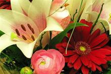 Flamingo Flowers returns to profitability