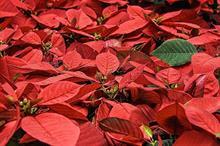 Fresh Produce Consortium joins ornamentals lobby