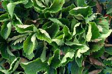New strawberry fungicide to set new standard for powdery mildew and Botrytis management