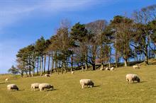 Trees benefit livestock and finances, says upland farmer