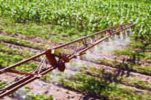 Loss of azole fungicides would hit yields, say two-thirds of vegetable growers