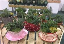 Hawkesmill Nurseries for British Plant Fair
