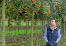 Wyevale Nurseries to supply trees and hedging year-round