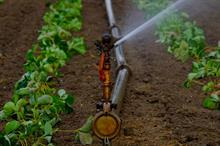 Changes set to open up choice of water supplier for horticulture businesses