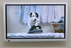 Thinkbox prepares a summer run for TV dog Harvey